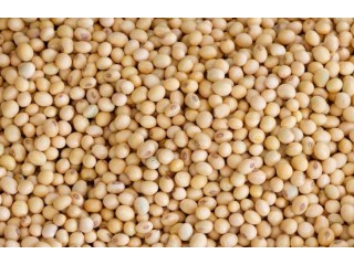 Niger Origin Soya Bean with LDC Certificate