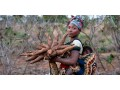 safe-venture-is-a-major-exporter-of-cassava-soya-beans-and-other-agricultural-products-small-1