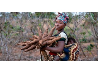 Safe venture is a major exporter of cassava, soya beans and other agricultural products