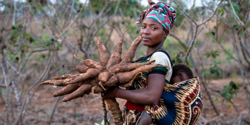 safe-venture-is-a-major-exporter-of-cassava-soya-beans-and-other-agricultural-products-big-1