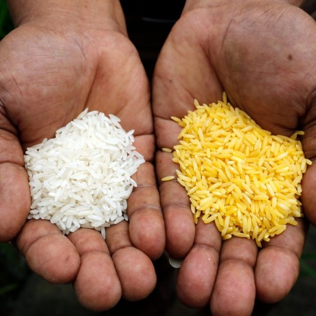 exporters-of-quality-rice-big-0