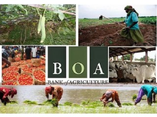 Bank of Agriculture Limited (BOA