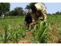 grant-aids-to-farmers-small-0