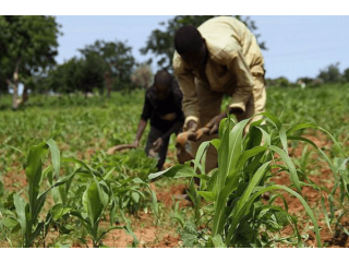Grant aids to Farmers