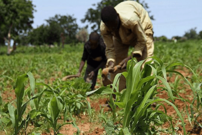 grant-aids-to-farmers-big-0