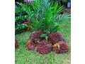 anakco-palm-farm-care-nigeria-limited-is-a-farm-and-oil-mill-industry-small-0