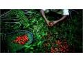 abuja-first-grade-palmoil-at-affordable-rates-small-0