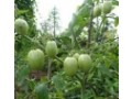 sales-of-agricultural-chemicals-and-vegetable-seeds-small-0