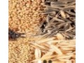 provides-market-quality-seeds-in-nigeria-small-0