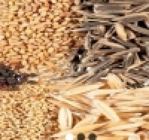 provides-market-quality-seeds-in-nigeria-big-0